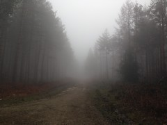 #foggyforest #fog #hemstedforest #forestphotography #forest #forestwalk (rhiannonjazz) Tags: fog forest forestwalk foggyforest hemstedforest forestphotography