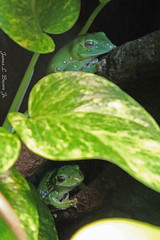 Frog2 (jb5860) Tags: artisticphotos jb5860