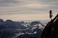 Gravity is a Myth #25 inExplore ab 18Uhr (bandit4czm) Tags: schnee winter panorama cloud mountain snow tree tirol cloudy wolken berge bach aussicht baum lechtal ausserfern baumgrenze jchelspitze lechweg