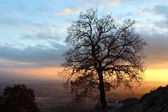 Final de jornada (Albert T M) Tags: sunset contraluz atardecer catalonia nubes catalunya arbre catalua contrallum nvols postadesol osona catalogne capvespre santperedetorell santuaridebellmunt