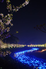 20160305-DSC_2324.jpg (d3_plus) Tags: street sea sky plant flower nature japan spring nikon scenery nightshot cloudy bloom  cherryblossom  sakura lightup nightview 28105mmf3545d nikkor    shizuoka    izu   28105   rapeblossom    28105mm  zoomlense  minamiizu    kawazuzakura    28105mmf3545 d700 281053545  nikond700 shimokamo aiafzoomnikkor28105mmf3545d nightcherryblossom 28105mmf3545af    southcherryblossomandrapeblossomfestival aiafnikkor28105mmf3545d shootingstarsandsakurainnight sakurainnight