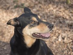 _DSC0194 (Jacob_O) Tags: dogs candy tanuki d750 vr honden f3545 2485