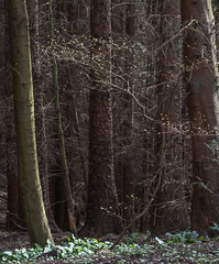 Natural Bend (Dylan Nardini) Tags: uk trees nature scotland woods nikon lanarkshire southlanarkshire d810