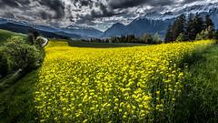 Tyrolean R(h)apsody (marke59) Tags: austria tirol sterreich outdoor gelb raps 2016 wolkenstimmung at ampass marke59