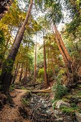 Julia Pfeiffer Burns State Park (Christopher Chan) Tags: california trees canon woods bigsur northamerica redwoods 1022mm 30d juliepfeifferburns