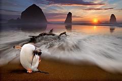 Una grattatina (Zz manipulation) Tags: sea art tramonto mare natura sole colori dormire spiaggia luce pinguino sabbia stanchezza ambrosioni zzmanipulation