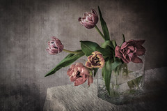 Tulipanes I (JACRIS08) Tags: ~themagicofcolours~