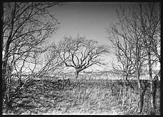 Well Hill (fawcetownsley) Tags: trees blackandwhite bw film miniature diy developer 16mm fixer subminiature sunny16 minolta16 homemadesoup 12asa pg110b
