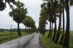 On the way back from Kyeikmayaw to Mawlamyine (Michael Chow (HK)) Tags: myanmar mm myanmarburma monstate mawlamyine hpayagon kyeikmayaw