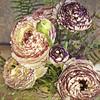 Persian buttercup (jgokoepke) Tags: painterly macro ranunculus flypaper zeiss50mmmacroplanar
