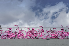 Giro d'Italia (Pieter Musterd) Tags: pink holland rose canon arnhem nederland canon5d fietsen fiets bycicle giroditalia musterd wielerwedstrijd pietermusterd 5dmarkii rondevanitali