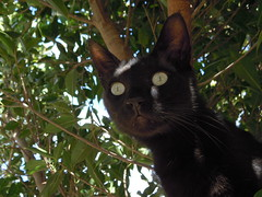 Hoy cumplo 3 aos!!!! (susyyyy) Tags: pet naturaleza verde fauna negro canarias gato tenerife felino albero gatto canaryislands nero khalid mascota micio canarie