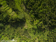 Tegalalang rice terraces - Bali-2016-3 (Christian Loader) Tags: bali field indonesia rice terrace aerial system unesco worldheritagesite agriculture irrigation ubud paddyfield riceterrace drone phantom3 tegalalang aerialimage subak tegallalang scubazoo christianloader tegalalangriceterrace scubazooimages djiphantom3professional