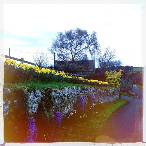 Daffodils and purple plants at Heatherslaw - Ford and Etal, Northumberland - Hipstamatic