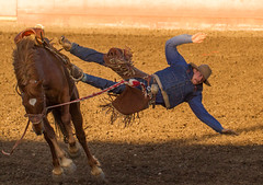 Off the horse (kylebagleyphotos) Tags: portrait horse fall sport cowboy action booted candid event rodeo cwu ellensburg horseriding
