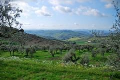 Artimino Landscape 1