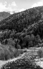 Spiazzo - Trentino Alto-Adige (kingappia87) Tags: blackandwhite mountain mountains tree film nature water monochrome analog montagne river 50mm blackwhite pentax k1000 kodak fiume trix ishootfilm 400tx epson trentino biancoenero altoadige v550 5014 bwfilm filmphotography pellicola trentinoaltoadige spiazzo smcpk50mmf14 pentaxart filmneverdie