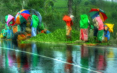 The watercolor (Saint-Exupery) Tags: road leica color colour carretera candid srilanka robado