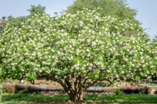 Tree-Bokeh