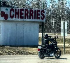 Cherries Above (ezigarlick) Tags: fruit spring cherries manitoba riding harleydavidson motorcycle april fruitstand richer highway302