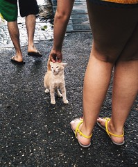 Up Close Street Photography Stray Cat Kitten Enjoying The Moment Petting A Cat Jamaica Tourists (Shannon F Gorman) Tags: kitten tourists jamaica straycat enjoyingthemoment pettingacat upclosestreetphotography