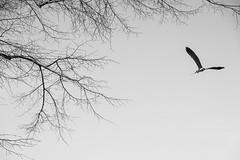 fototour-wilhelma-stuttgart-26523 (pixelcatcher.de) Tags: baum vogel storch flug