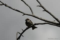 _DSC0492 (chris30300) Tags: france heron de pont parc oiseau camargue gau saintesmariesdelamer flamant provencealpesctedazur ornithologique