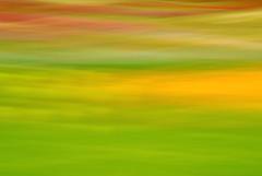Champs de tulipes (Valentin le luron) Tags: nature fleur de la nikon suisse cte lausanne e rothko yves fte paysage 800 couleur tulipe vaud morges fil abstrait romandie paudex 20160425