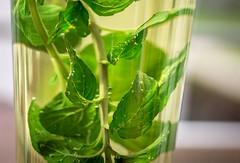 fresh peppermint (phlickrron) Tags: food green tea drink makro peppermint tokina100