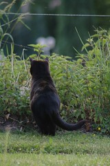 The hunter (dididumm) Tags: black cat watching hunting hunter katze schwarz beobachten jger jagen