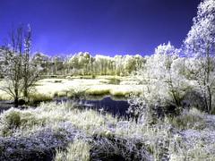 CravaMorozzo2016_IR_4250686 copia (stegdino) Tags: lake ir lago infrared refelection infrarosso crava morozzo cravamorozzo