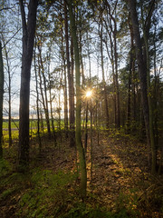 Waldesblick (Forest view) (berlin-belichtet.de) Tags: trees sun sunlight tree nature forest germany landscape natur olympus landschaft sonne wald bume brandenburg baum omd em10 sonnenlicht briesenmark omdem10 waldesblick