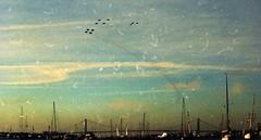 US Navy Flyover (rjl6955) Tags: nyc newyorkcity statueofliberty 1986 a6 intruder tomcat grumman f14a