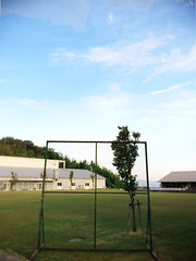 The left batter's box and a tree. (skip_harada) Tags: summer lake man tree green weather baseball wind want clear end kansai  turf  kinki    i