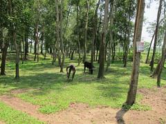 IMG_7013.jpg (Kuruman) Tags: sylhet bangladesh srimangal