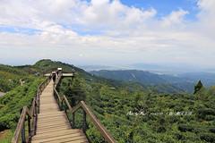 大崙山觀光茶園 (Tippi Chen) Tags: 大崙山觀光茶園