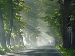 Luce tra i tigli (giorgiorodano46) Tags: road trees verde green strada linden marche viale tigli lindens limetrees vialealberato visso giorgiorodano
