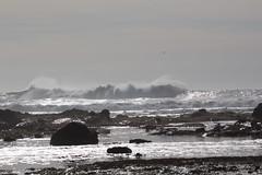 IMG_7276 (armadil) Tags: beach waves surfer wave beaches surfers mavericks bigwaves californiabeaches