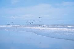 (Lourdes Jubete) Tags: ocean blue summer cold beach animals nikon nikond7000