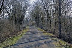10/366 - Trek (Esko) Tags: winter nature trek january hike trail 2016 365project 365challenge 366challenge 366project