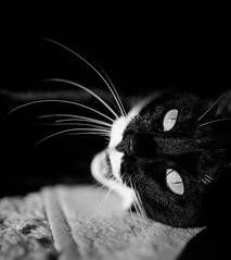 _MG_1493 (seandavidreed2016) Tags: blackandwhite dog cat