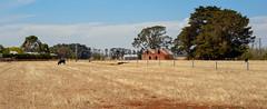 Farmland. (Ian M's) Tags: panorama landscape farm victoria vsco