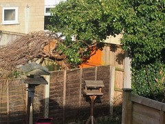 bird murderer (Lamerie) Tags: tree cat garden feline hunting birdtable gardenbirds wildbirdpopulation