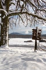 Die dicke Schneeflocke (Maximilian Kau) Tags: schnee winter snow tree canon germany landscape deutschland eos is dorf hessen feld schild stm landschaft baum lightroom wegweiser 2016 hohensolms f3556 ldk dnsberg 650d hohenahr lahndillkreis efs18135mm