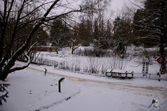 Eisbr Fiete im Zoo Rostock 23.01.2016  01 (Fruehlingsstern) Tags: vienna zoo polarbear vilma eisbr erdmnnchen fiete zoorostock geparden baumknguru canoneos750 tamron16300