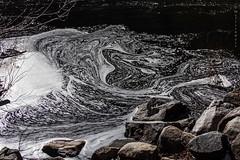 Eddy (San Francisco Gal) Tags: water rock stone river branch foam yosemitenationalpark mercedriver