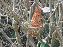 DSC02024 (Enrico Luigi Delponte) Tags: birds sony vogels uccelli sonyfuncamera