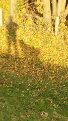 Me and my dog.... selfie! (despinkamer) Tags: autumn image herfst tafereel miscellanious