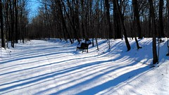 Lone Bench along the path... (neukomment) Tags: hiking winter railstotrail puremichigan thornappletrail bench trails paths usa january perspective woodlandwonders winterwounderland beautifulearth