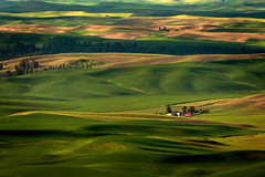 Little Red Barn (EdBob) Tags: steptoe steptoebutte park statepark farm farmland farming agriculture agricultural spring springtime barn red redbarn famous landscape palouse hills rural countryside country colorful color colfax shadows sunlight sunny easternwashington beautiful nature travel scenic view viewpoint green crops wheat legumes cultivation cultivated edmundlowephotography edmundlowe allmyphotographsare©copyrightedandallrightsreservednoneofthesephotosmaybereproducedandorusedinanyformofpublicationprintortheinternetwithoutmywrittenpermission wwwedmundlowephotocom